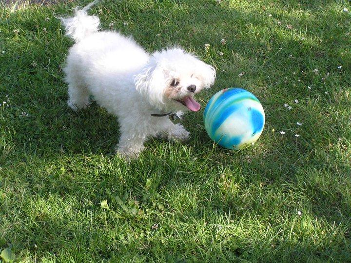 Naše Gina moc ráda hraje fotbal