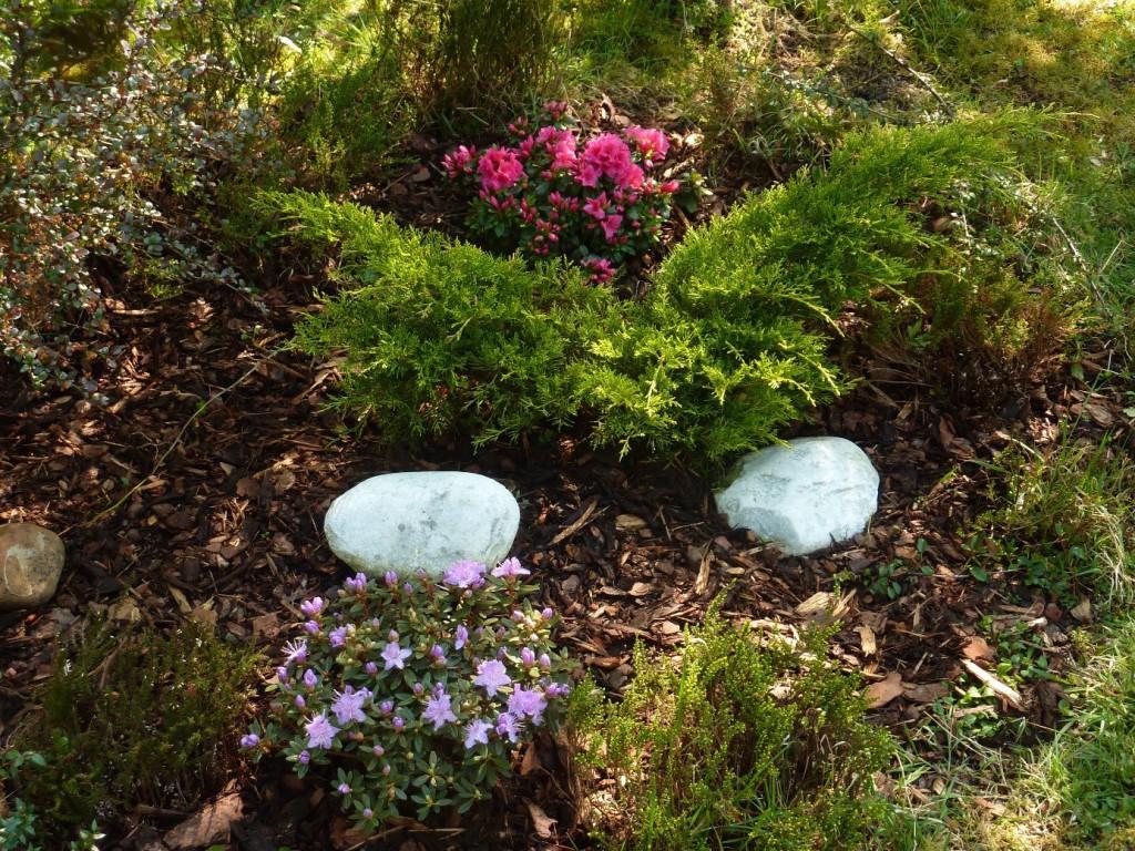 Azalka a fialový rododendron
