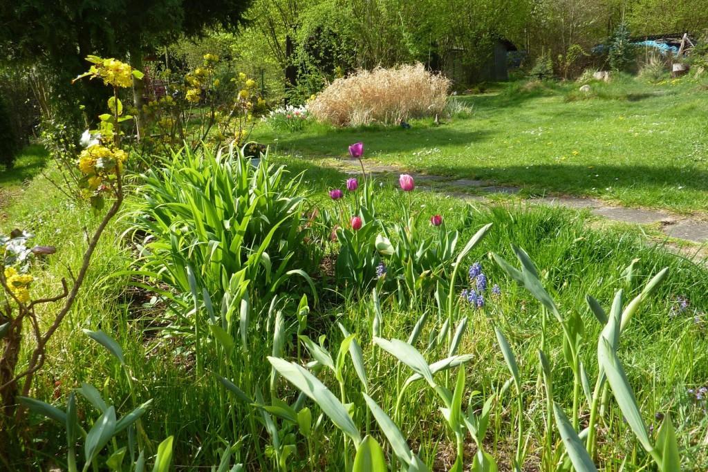 Kokoříky, listy denivek, tulipány a v pozadí suché okrasné trávy