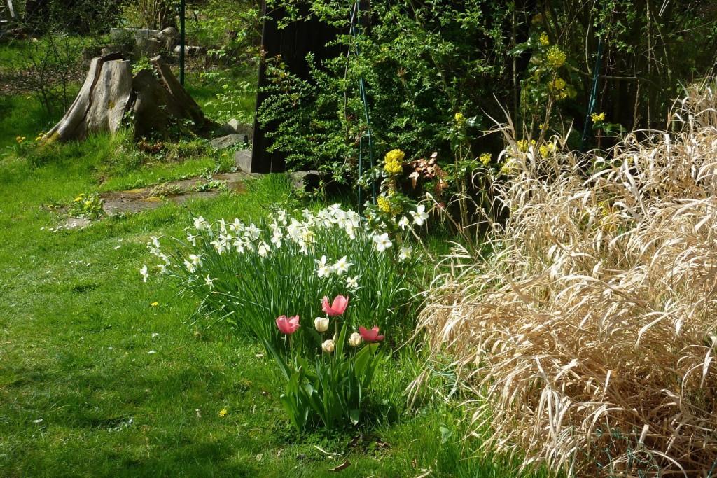 Narcisky, tulipány a uschlé okrasné traviny vedle kadibudky